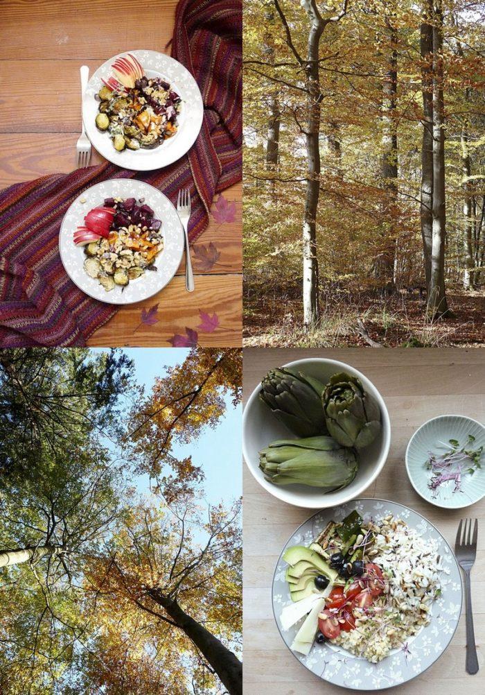 Drei verschiedene Rezepte für Harvest Bowls